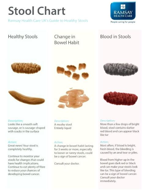 Cat Food For Stool by Soft Stool Foods That Soften Stool Soft Stool With Blood