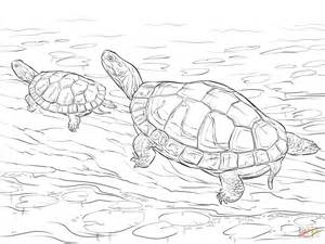 Two Painted Turtles Coloring Page Free Printable Snapping Turtle Coloring Pages