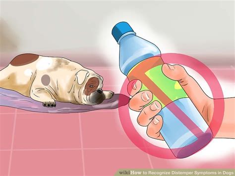 distemper symptoms in dogs how to recognize distemper symptoms in dogs 12 steps