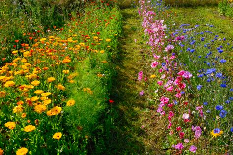 How To Create A Cutting Garden In Four Steps Higgledy Flowers For A Cutting Garden