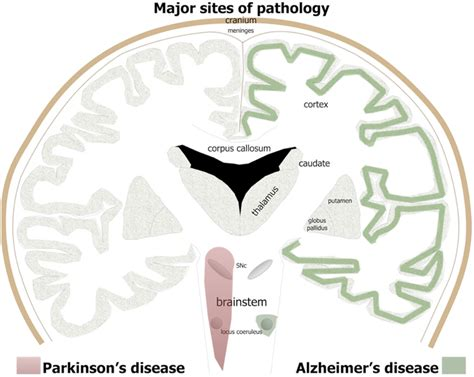 light therapy for parkinson s frontiers turning on lights to stop neurodegeneration