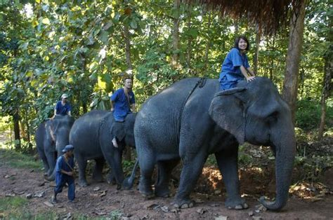 thai elephant home mae taeng all you need to