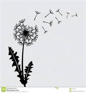 blow dandelion vector background stock photography image