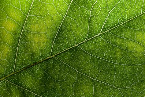 Texture Leaf Pattern | green leaf texture wild textures green pinterest