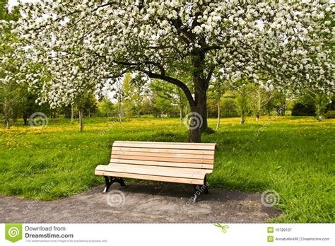 bench in park bench in park stock image image of serene urban benches