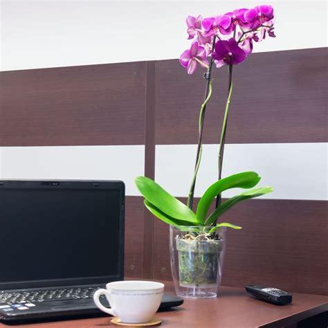 vasi in plastica per fiori vasi per orchidee vasi tipologie di vasi per orchidee