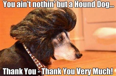 you ain t nothin but a hound pin by natalie bonilla on