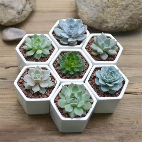 Cactus Planter by Hexagon Mini Planter Choice Of Succulent Or Cacti By