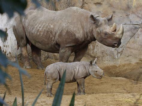 zoologischer garten magdeburg ggmbh zoo magdeburg touristische informationen 252 ber magdeburg