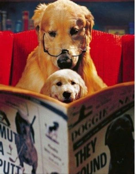 picture books about dogs dogs with books dogs reading tales to tails
