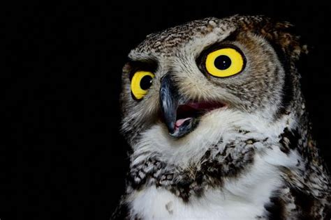 Fotos Animales Nocturnos | animales nocturnos informaci 243 n y ejemplos