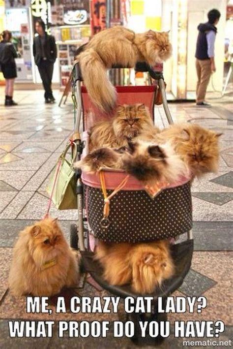 Cat Lady Meme - cat memes funny and cute kitten memes
