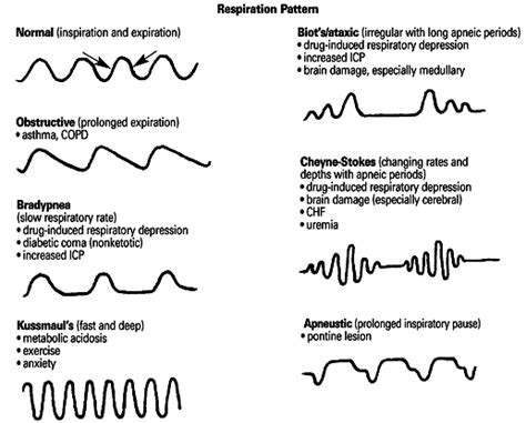 breathing pattern in heart failure approach to the respiratory patient basic anatomy review