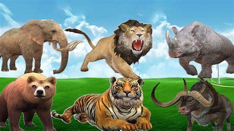 imagenes asombrosos de animales sonidos de animales reales salvajes zaza tv youtube