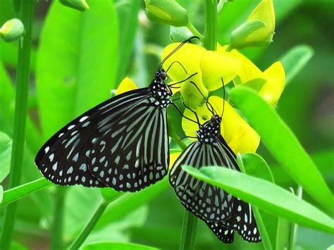 love butterfly nice  photo  pixabay