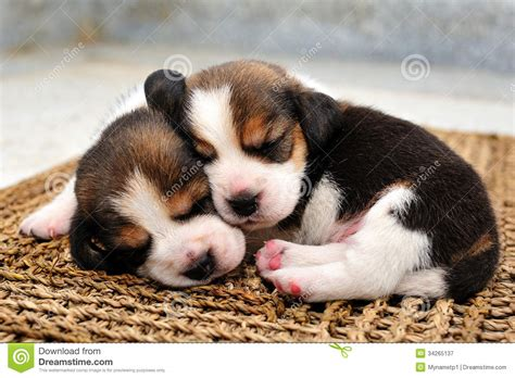 two puppies two puppies sleeping www imgkid the image kid has it
