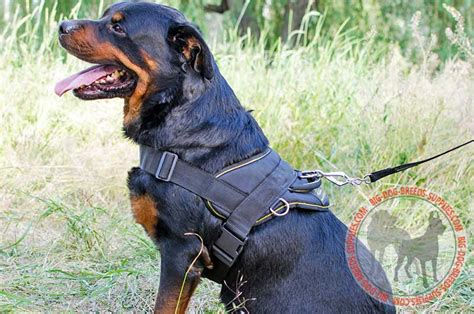 rottweiler harness tracking pitbull harness weight pull harness