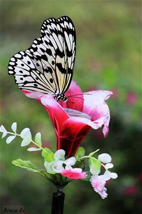 5 Beautiful White Things by 2859 Best Butterflys And Moths Images On