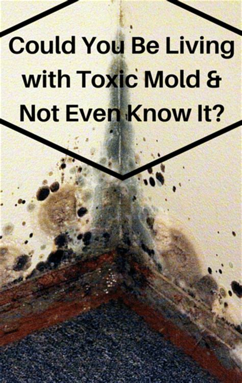 how to prevent mold in house dr oz how to find hidden mold in your house prevent
