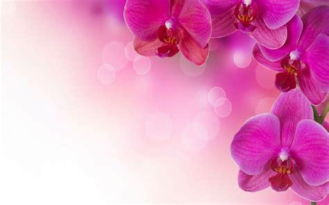 orchid flower petals ultra hd desktop