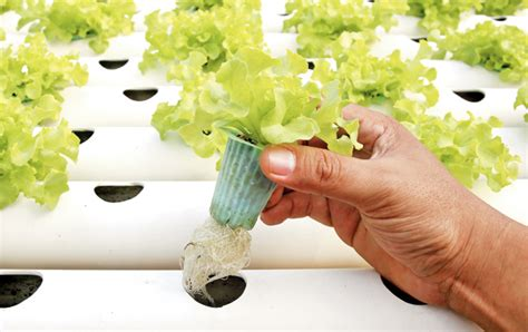 gardening hydroponics learn the amazing of growing fruits books grow vegetables at home without soil and style