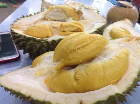 Benih Durian Udang Merah durian malaysia memang sedap