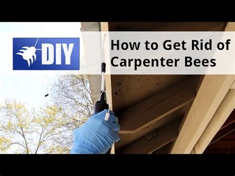 how to get rid of bees in house siding how to get rid of kill carpenter bees youtube