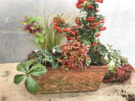 piante invernali da vaso composizione in vaso di piante invernali sempreverdi