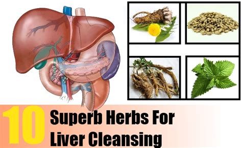 Liver Detox Home Remedy by 10 Superb Herbs For Liver Cleansing Search Home Remedy