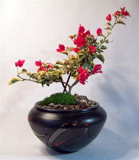Handmade Bonsai Pots For Sale - handmade custom ceramic bonsai pots for sale tootalls