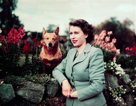 corgis queen elizabeth the inside history of queen elizabeth s eight decade corgi dynasty vanity fair