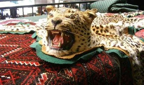 leopard skin rug for sale leopard skin rug with a monthly antiques auction lawsons antiques reporter
