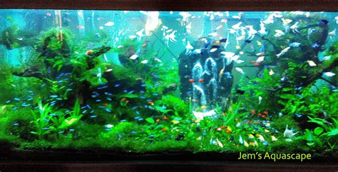 jem s aquascape jasa design dan maintenance aquascape