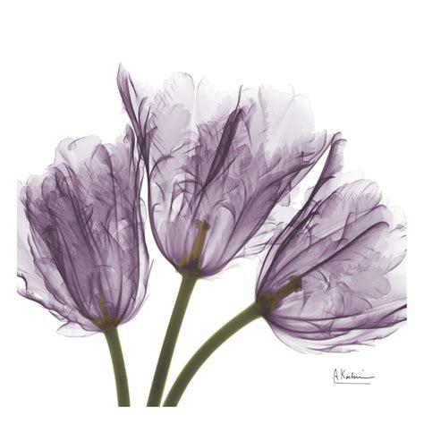 albert koetsier albert koetsier x ray flowers pinterest