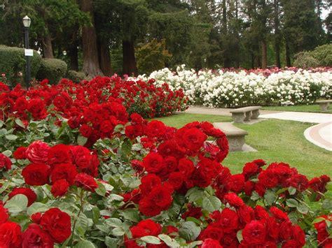 home and garden design show san jose san jose municipal rose garden garden idea san jose