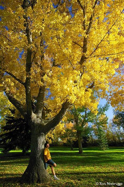 maple garden great falls mt 101 best images about montana in the fall on