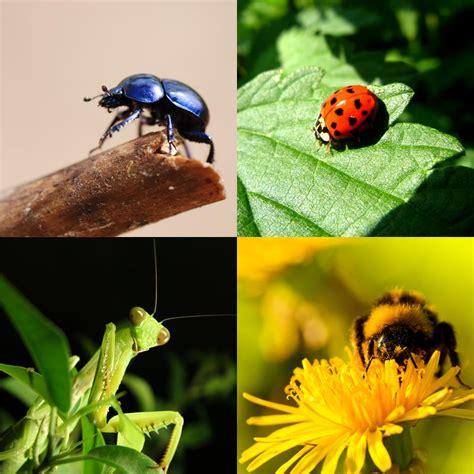 imagenes de animales utiles insectos beneficiosos para el jard 237 n uncomo