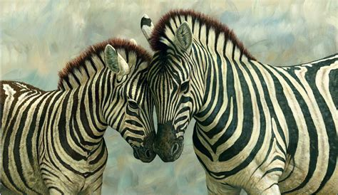 what color is a zebra colors images black and white zebra hd wallpaper and