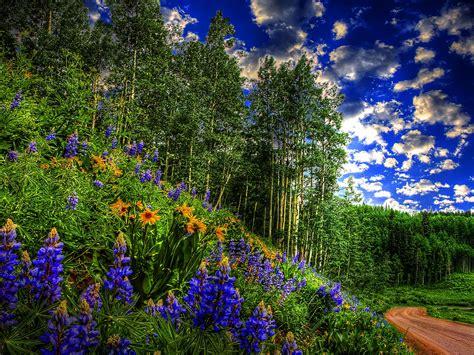 alberi e fiori la forza delle piante le piante dominano gli animali