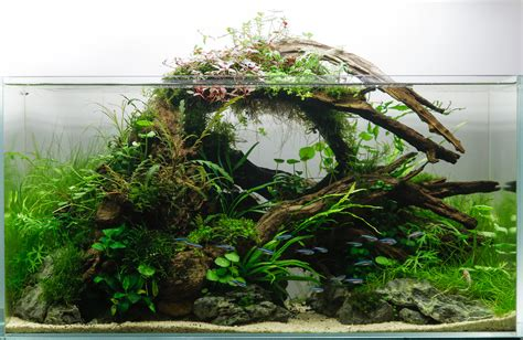 Aquascape Designs Products by A Collection Of Beautiful Aquascapes Kristelvdakker