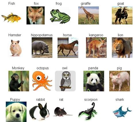 new year named after animals new year names animals 28 images learn with pleasure