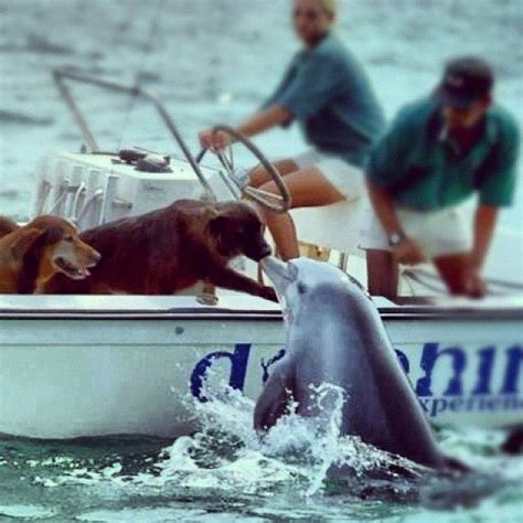dog boat dolphin amazing dolphin kissing a dog on a boat a dog s life