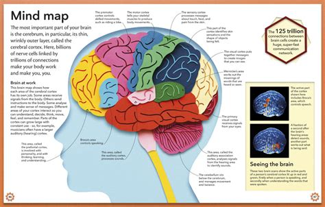 brain wiring diagram k grayengineeringeducation