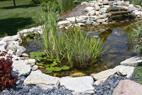 pond design plant versus rock edges pond trade magazine