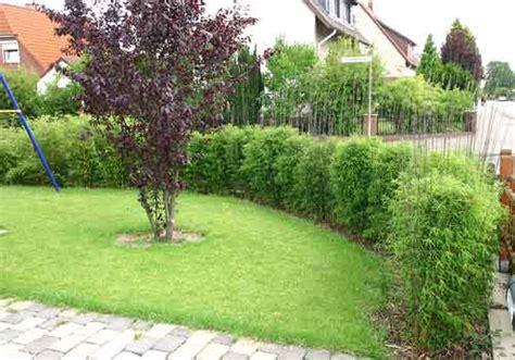 Grüner Sichtschutz Im Garten 1080 by Bambus Pflanzenshop Fargesia Jiuzhaigou 1 Jade