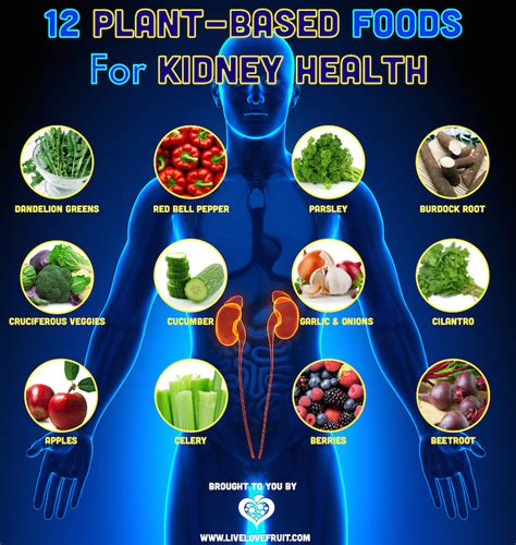 kidney food 12 plant based foods to improve the health of your kidneys live fruit