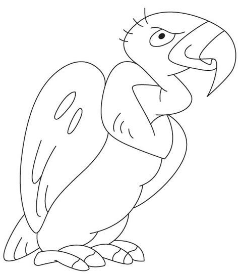king vulture coloring page the gallery for gt bird soaring outline