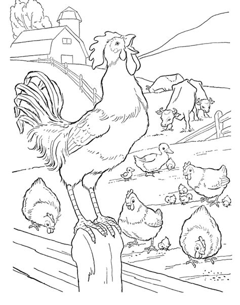 coloring book pictures rooster rooster coloring pages coloring home