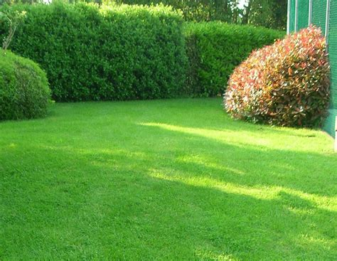 il giardino the prato la semina prato quando e come tecnoverde giardini