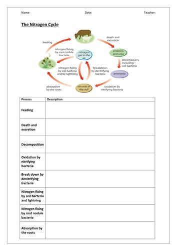 Nitrogen Cycle Worksheet by Eutrophication Worksheet Worksheets For School Toribeedesign
